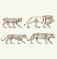 Wild cats set lynx lion leopard and tiger vector