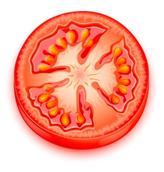 a slice of tomato vector image vector image