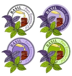 Basil Set of essential oil labels vector image