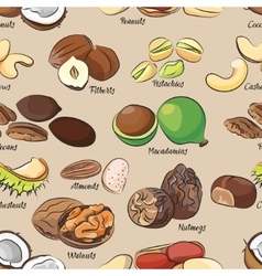 Collection of different nuts pattern vector