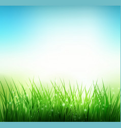 natural green grass background vector image