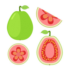 slices of guava whole exotic fruit flat cartoon vector image vector image