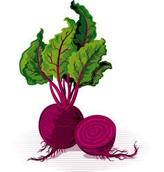 Beetroot resting on a plane vector