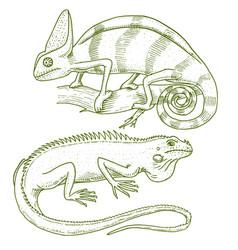 Chameleon lizard american green iguana reptiles vector