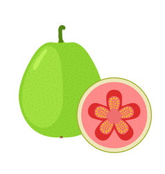 guava exotic fruit whole slice in flat cartoon vector image vector image