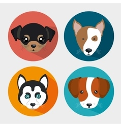 cute set puppy pet icons design vector image