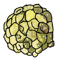 Custard apple on white background vector