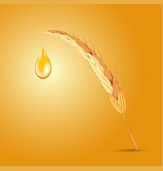 wheat ear with oil drop vector image