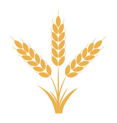 Wheat or rye ears with grains vector