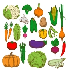 Healthy and juicy fresh vegetables sketch symbol vector image vector image