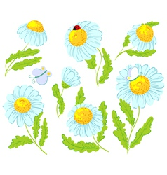 chamomile flowers vector image