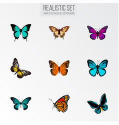 set of moth realistic symbols with hairstreak vector image