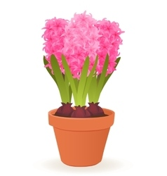 Hyacinth flower pot vector image vector image