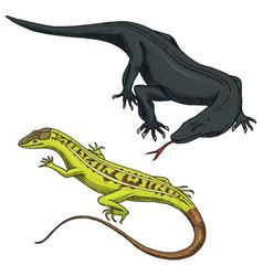 komodo dragon monitor american sand lizard vector image vector image