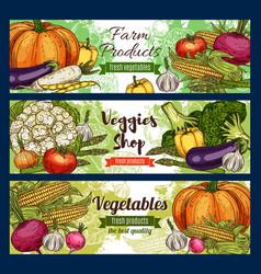healthy green vegetables veggie farm shop vector image