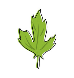 leaves with stem icon image vector image