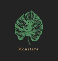 palm leaf on black background vector image