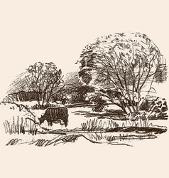 pencil drawing rural landscape with a grazing vector image