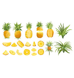 Pineapple fruit tropical collection colorful vector