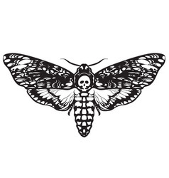 Skull moth butterfly death head hawk moth vector