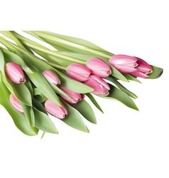 Pink tulip vector image vector image