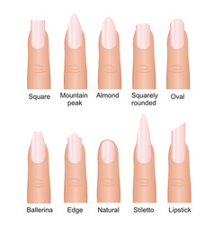set of different nails shape vector image vector image