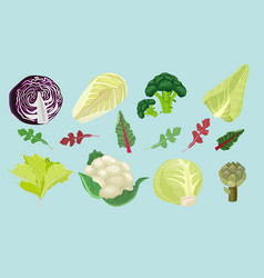 cabbages green natural healthy food vector image