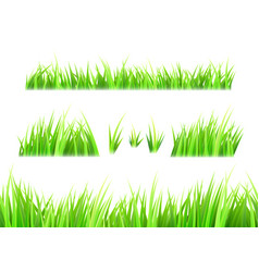 grass isolated on white background tufts vector image
