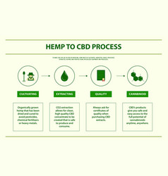 Hemp to cbd process horizontal infographic vector