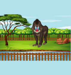 Scene with big baboon in zoo vector