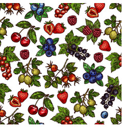set of colorful berries vector image