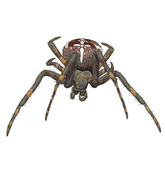 Portrait scary spider vector image vector image