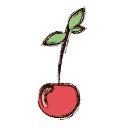 red vegetable cherry icon vector image vector image