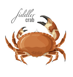 fiddler crab nature marine animal with claws vector image