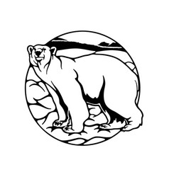 Polar bear polar belt antarctica - wildlife vector