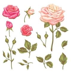 set floral elements with vintage roses vector image