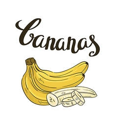 bananas isolated on the white background Hand vector image vector image