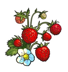 Bunch of wild strawberry realistic drawing vector image