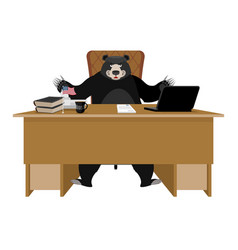 baribal american black bear sitting in office vector image
