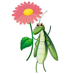 green bug holding pink flower on white background vector image