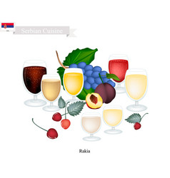 Rakia or fruit brandy popular beverage in serbia vector