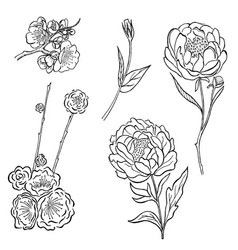collection of hand drawn peony and rose vector image