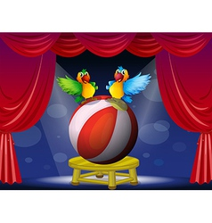 Two colorful parrots at the stage vector image