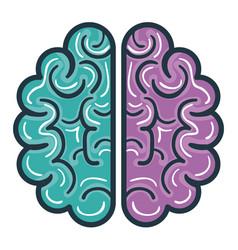 brain halves flat vector image