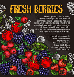 Berry and fruit chalk sketch poster on blackboard vector