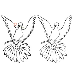 Dove Line Art vector image