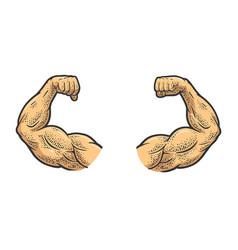 Muscular hands strong man color sketch vector
