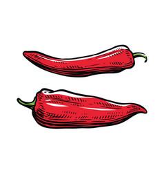 Red pepper culinary seasoning food vector