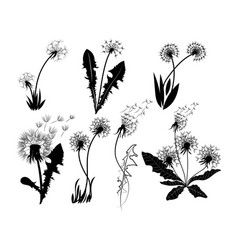 set dandelions collection stylized vector image