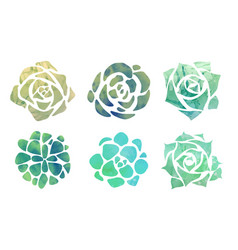 Set of watercolor succulents with a top view on a vector